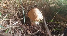 отдых грибы в лесу лиски воронежская область природа